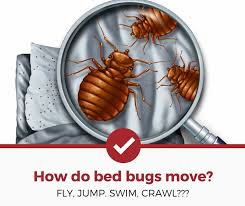 can bed bugs fly or jump how do they