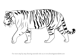 easy tiger pencil drawing. Interesting Pencil Learn How To Draw A Siberian Tiger For Easy Pencil Drawing I