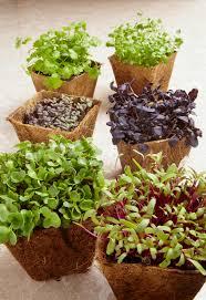 six various garden plants indoors