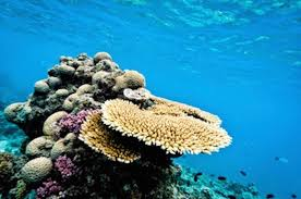 personal essay for education degrees education elementary resume image photo wanderlusters once we had explored the outer edges of the great barrier reef cnn