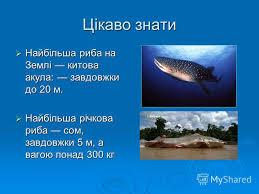 reebok Энциклопедия моды Реферат на тему рибок