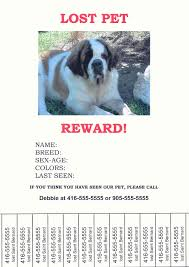 Lost Pet Poster Template Missing Animal Flyer Besikeighty24co 13