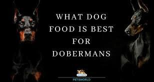 What Dog Food Is Best For Dobermans Pets World