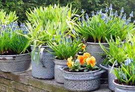 how to plant a garden. Container Gardening How To Plant A Garden