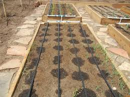 garden drip system irrigation design vegetable systems first two pads using lines of agriculture container pipe