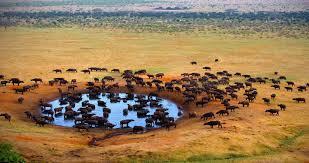 Resultado de imagen de SUDAFRICA SAFARI