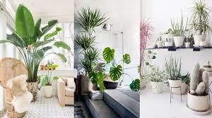 25+ Best Indoor Plants Ideas - Simple Ways to Decorate with Houseplants