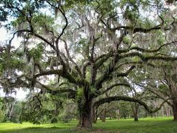 Tree Identification Guide Resources For Identifying Trees