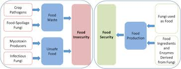 The Fungal Threat To Global Food Security Sciencedirect