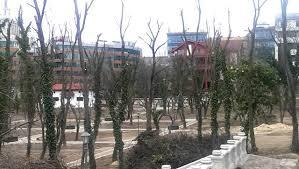 Toaletarea arborilor, un subiect ignorat de autorități, semnalat de OAR