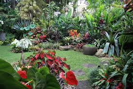 Small Picture Tipos de jardins e como decor los Tropical garden Brisbane and