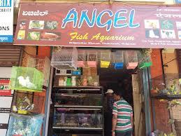 angel fish aquarium 4 0
