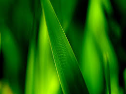 Wallpaper Close up of green grass blades leaves soft focus