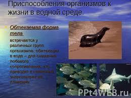 Презентация на тему Три среды обитания организмов  Приспособления организмов к жизни в водной среде Обтекаемая форма тела встречается у различных групп организмов