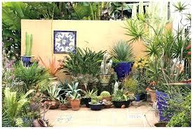 best plants for patio pots good outdoor plants for pots potted plants patio good plant ideas