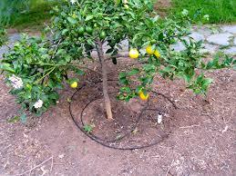 drip system for garden. Drip System For Garden M