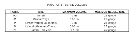 Mouse Injections Biomethodology For Laboratory Mice