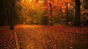 fall nature backgrounds. Fall Nature Backgrounds Autumn L