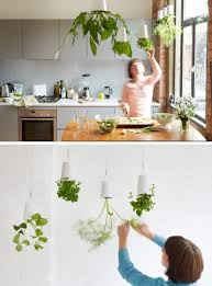 indoor garden ideas hang your plants from the ceiling walls make a