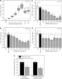 Silencing of sucrose hydrolase causes nymph mortality and disturbs ...