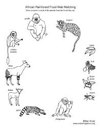 african_rainforest_foodweb_matching72 african rainforest food web matching on food web worksheet pdf