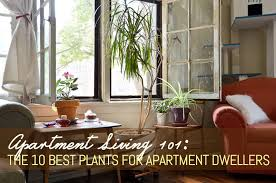 Interior Design For Apartment Living Room Amazing Apartment Living 48 The 48 Best Plants For Apartment Dwellers 48sqft