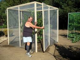 Tree Cage How To Protect Your Fruit Trees From Cats  Deer And How To Protect Your Fruit Trees From Squirrels