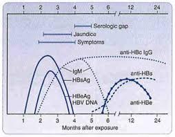 Hepatitis B Chart Hepatitis B Virus Microbiology Medbullets Step 1