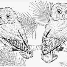 Printable Owl Coloring Pages For Adults Fresh Free Printable Hot