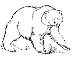 exploit bear coloring book cardattraction