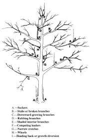 Prune Fruit Trees And Shrubs At The Right Time  Vegetable GardenerPrune Fruit Tree