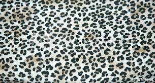 endangered wildlife leopard skin rug displayed indoors