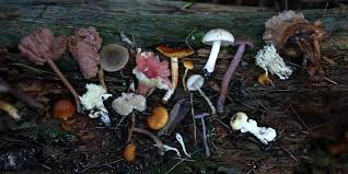 Medicinal Mushrooms The Complete Guide Grocycle