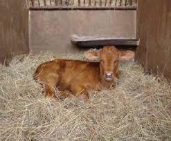 Image result for vitel