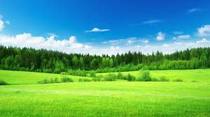 grass and sky backgrounds. Grass Tag - Clouds Field Trees Nature Woods Landscapes Forest Green Sky Full Hd Amazing And Backgrounds E
