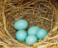 eggs destro