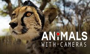 Image result for animals with cameras