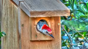 Redheaded woodpecker nesting boxes