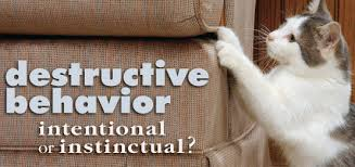 Cats Scratching your Furniture What you Can Do About Destructive