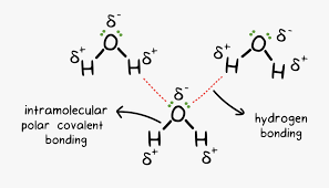 Hydrogen Bonding H2o Drawing Chemical Bond Intermolecular Hydrogen Bonding