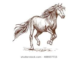 running horse drawing. Wonderful Drawing Prancing Horse Portrait Proud Graceful Mustang Stallion Freely Running  Against Wind With Waving Mane And With Running Horse Drawing D