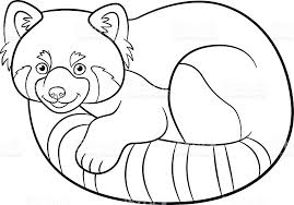 Small Picture Coloring Pages Little Cute Red Panda stock vector art 596793952