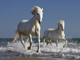 beautiful wild horses on the beach. Download Inside Beautiful Wild Horses On The Beach Wallpapers