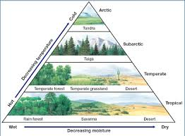 What Are Biomes How Are Biomes Distinguished From Eachother Socratic