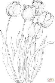 Coloriage Quatre Tulipes Coloriages Imprimer Gratuits