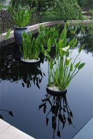 container water garden. Interesting Garden From One Gallon To 20 Or Even 500 Gallons Any Tub Pot Barrel  Container That Can Hold Water Be Used The Larger It Is The Easier Will  With Container Water Garden O