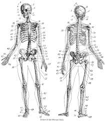 Small Picture Skull Coloring Pages Anatomy Anatomy Skull Coloring Pic Source