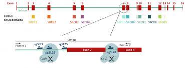 Genome Editing Genome Editing And Engineering The University Of Edinburgh