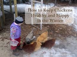 Best 25 How To Keep Chickens Ideas On Pinterest  Raising How To Keep Backyard Chickens