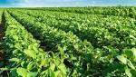 Pese a la sequía, la soja duplicó en ventas a la industria automotriz